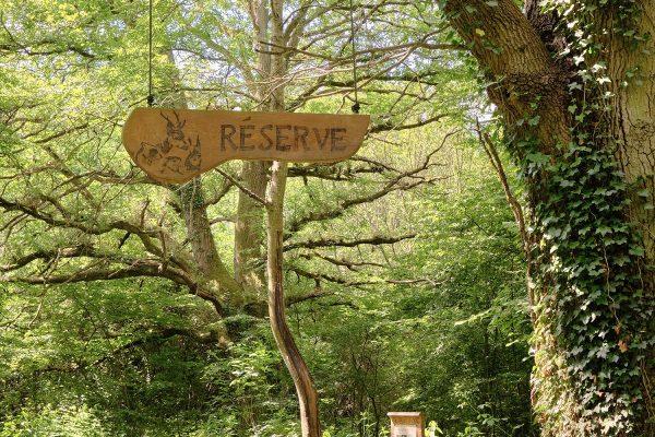 RESERVE FORET - LA RESERVE - LUCAS MADANI (2)